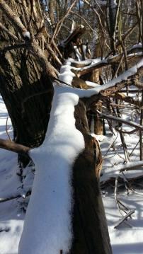 zimska-fruskac-setnja-8