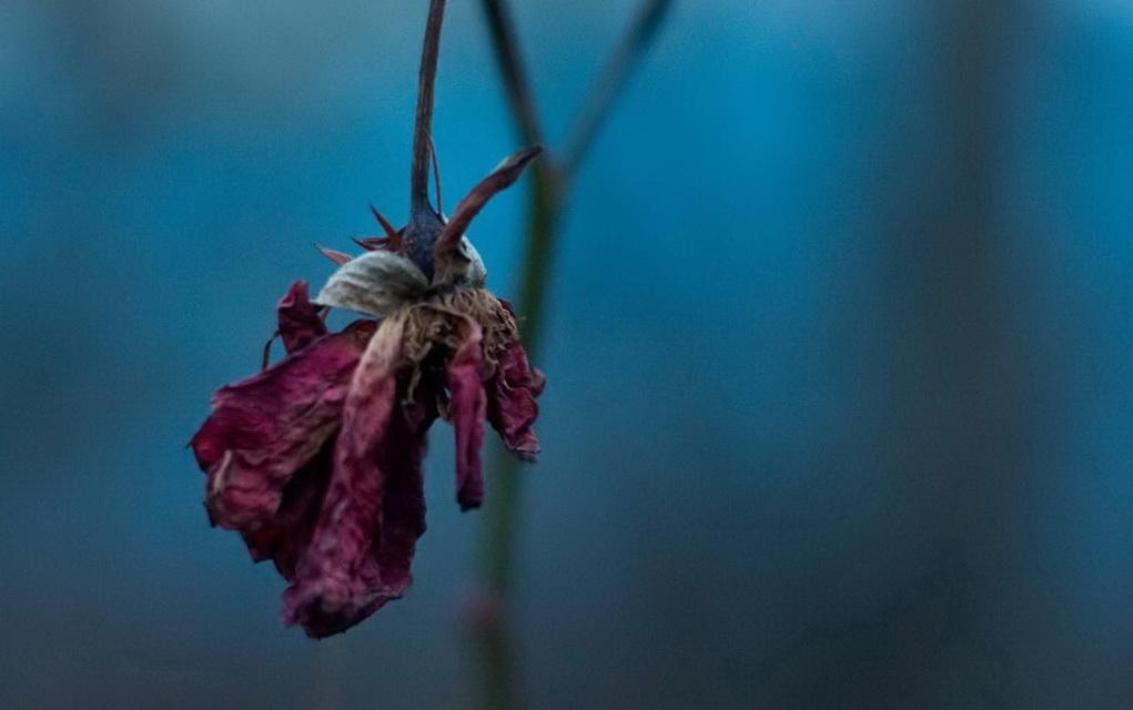 dead-flower