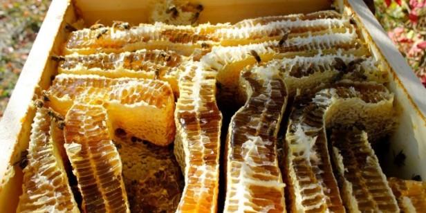 pčele-i-med