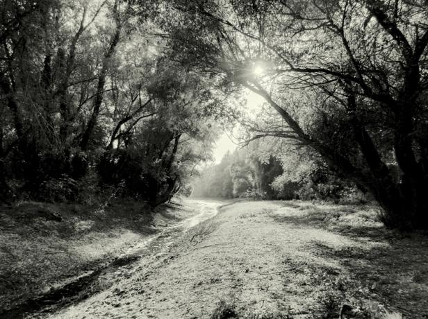 milos-pavkov-fotograf-ugrip-dotkom-galerija-digitalna (4)