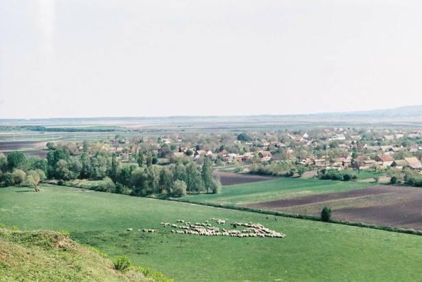 Verica-Varga-Lok-1
